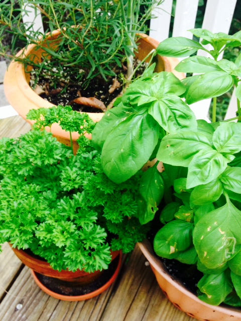 Pots of fresh herbs